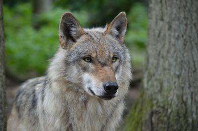 Foto: Jan Preller/Landesbetrieb Wald und Holz NRW