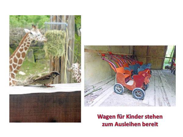 Wieder mal in den Zoo….