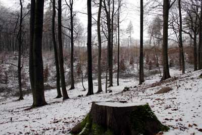 Unsere Wälder sind für die Folgen des Klimawandels gut gewappnet