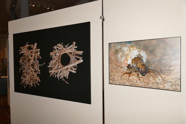 Blick in die ARCHITEKTIER-Ausstellung mit Fotos von Köcherfliegen-Larven. ©Ingo Arndt