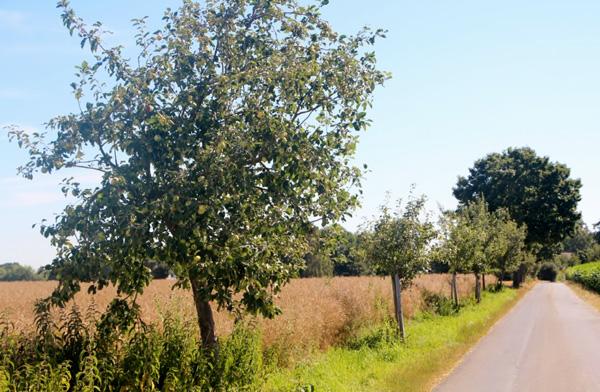 Obst am Wegesrand pflücken