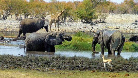 Drei Elefanten und andere Tiere am Wasserloch.