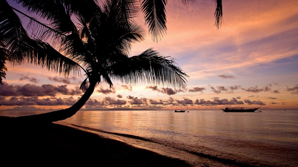 Palmen und Strand bei Abenddämmerung